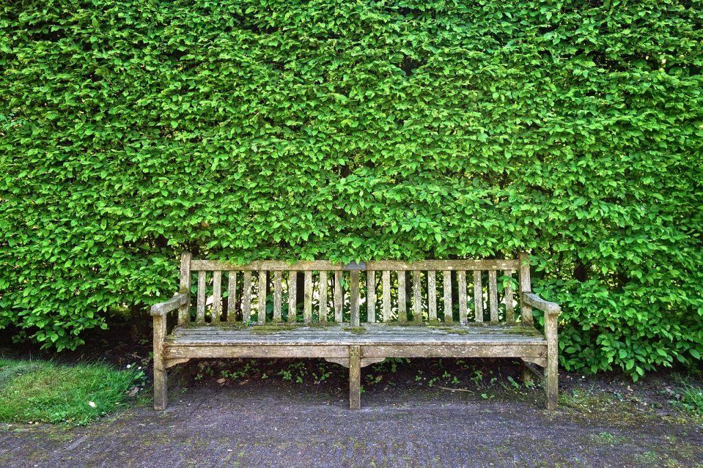 inwentaryzacja zieleni