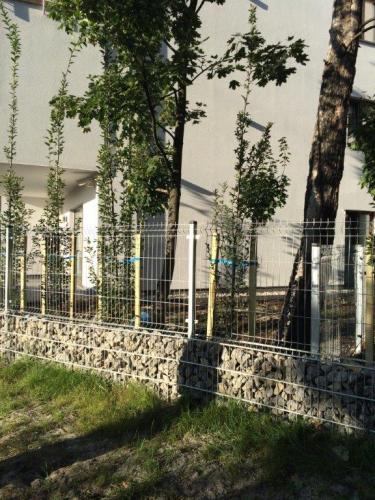 Nasadzenia drzew11