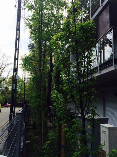 Nasadzenia drzew12