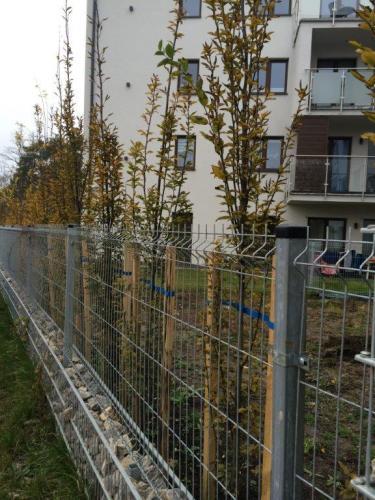 Nasadzenia drzew5
