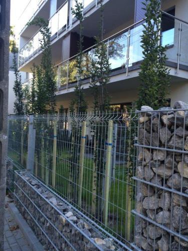 Nasadzenia drzew7