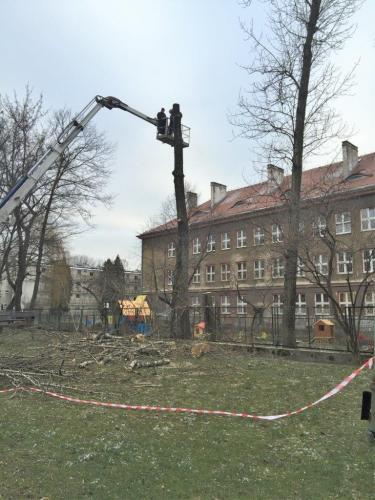 Pielęgnacja i wycinka drzew