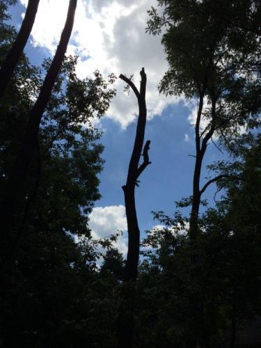 Pielęgnacja i wycinka drzew12