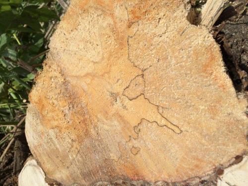 Pielęgnacja i wycinka drzew13