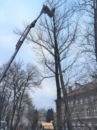 Pielęgnacja i wycinka drzew2