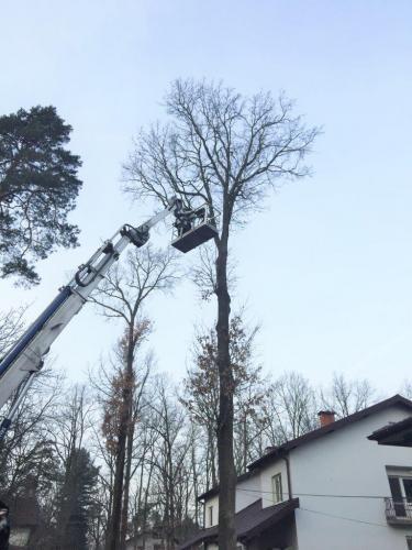 Pielęgnacja i wycinka drzew5
