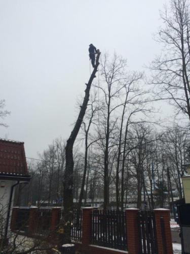 Pielęgnacja i wycinka drzew6
