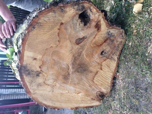 Pielęgnacja i wycinka drzew8
