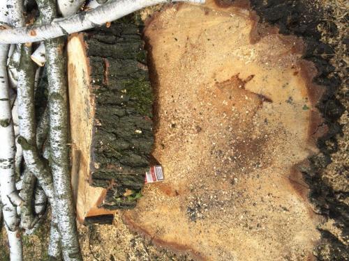 Pielęgnacja i wycinka drzew9