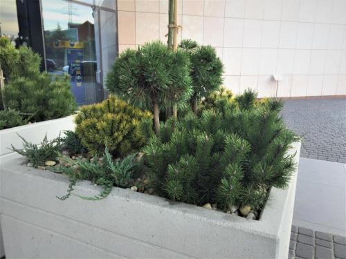 zielen---siedziba-tvn-s-a-warszawa10