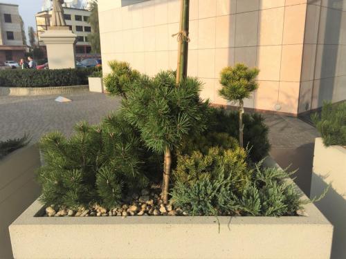 zielen---siedziba-tvn-s-a-warszawa11
