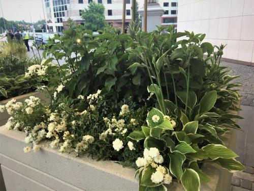 zielen---siedziba-tvn-s-a-warszawa8